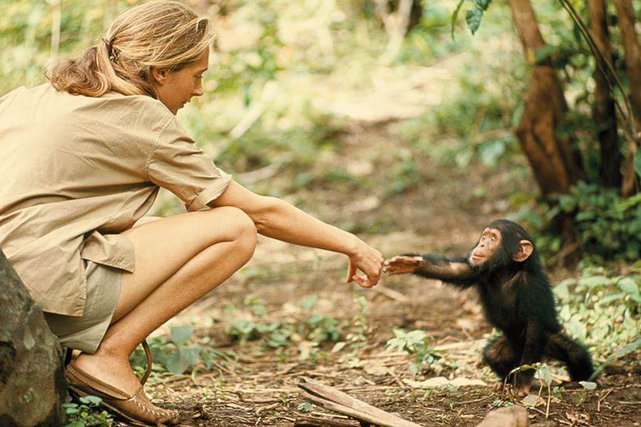 Tanzania | 1964 Fotografia di Hugo Van Lawick